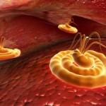 Hot Water Treatment kills all the bacteria and virus in the rug. cooldesignfreedigitalphotos.ne/