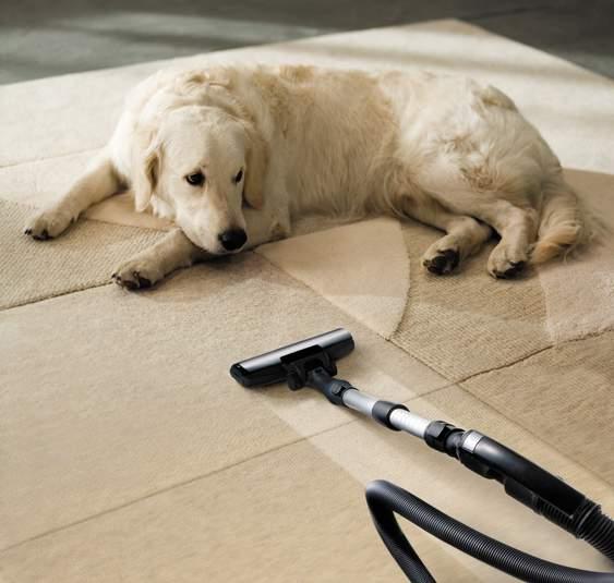 Pet on carpet