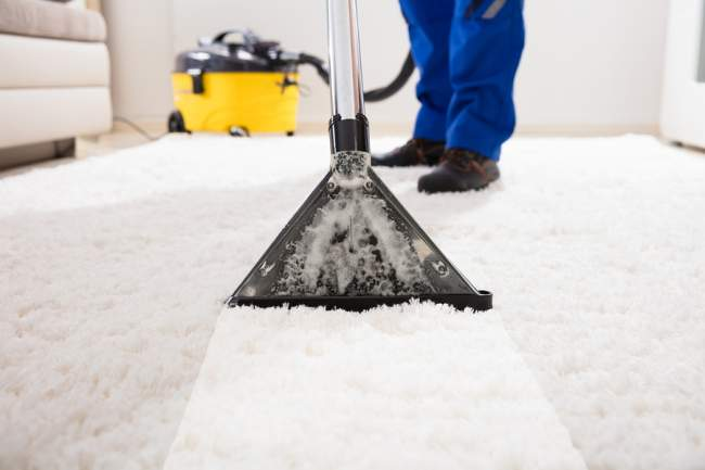 The uses of a carpet shampooer for pets