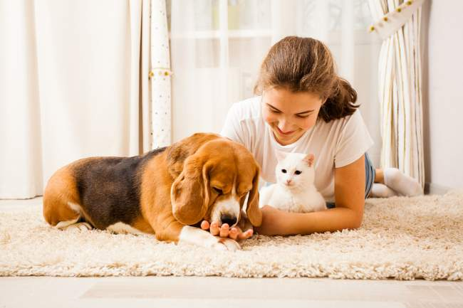 carpet cleaning guide for pet owners